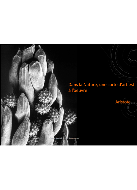 France_Boureli_2